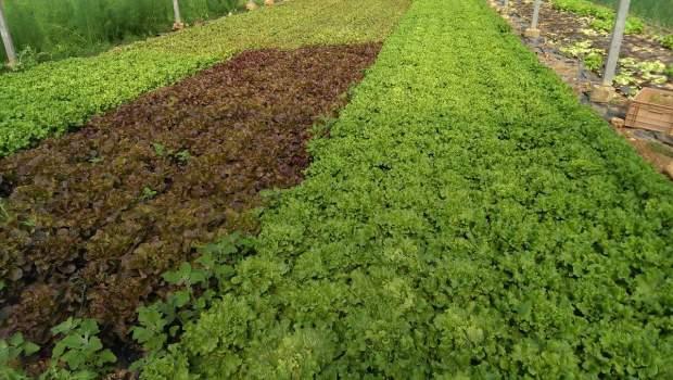 salade bio aix en provence